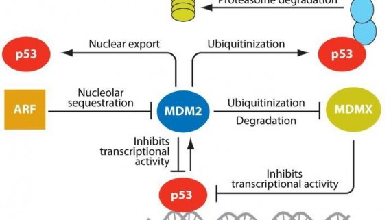 Annotated Library Of Mdm2 P53 Interaction Inhibitors Chemdiv
